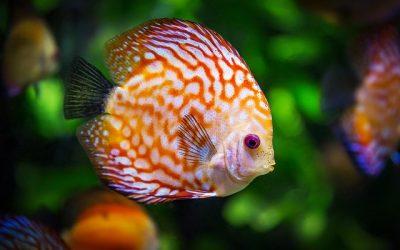 Comment bien entretenir votre aquarium à poisson ?