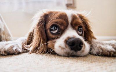 Comment prendre soin de son chien ?
