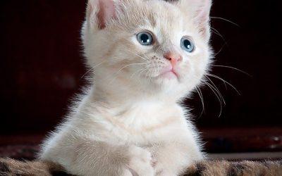 Comment aisément vivre avec les chats ?