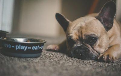 Pourquoi intégrer les croquettes industrielles dans l'alimentation canine ?