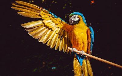 Et si on Adopte un oiseau de compagnie